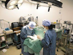 避妊・去勢手術の助成金について